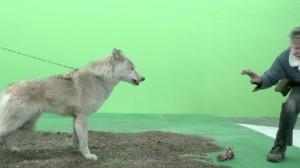 GOT facts - Wolfs
